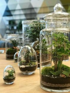 The terrariums from Green Factory have landed 🌱🌿 Indoor Garden, Garden Plants, Indoor Plants, Terrarium Plants, Succulent Terrarium, Paludarium, Vivarium, Room With Plants, Bottle Garden
