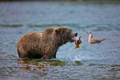 """""""Fight for life"""" by Buck Shreck...also the cycle of life"""