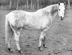 This mare's thick, wet coat may lead to rain rot.