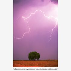 Lightning bolt visually frames a lone tree, east of Fort Collins, Colorado. Copyright Ed Darack.
