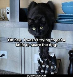 Top 25 Funny Animal Memes Of The Day