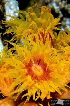 An anemone - Ocean Life Underwater Creatures, Underwater Life, Under The Ocean, Sea And Ocean, Beautiful Sea Creatures, Beneath The Sea, Salt Water Fish, Sea Anemone, Sea Slug
