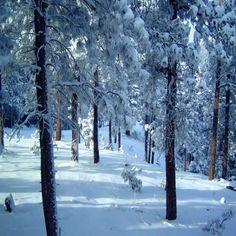 Colorado Winter Blue Landscape Photo - Morning Snow - 5X7 Photograph by JuieMagersSoulenPhotography