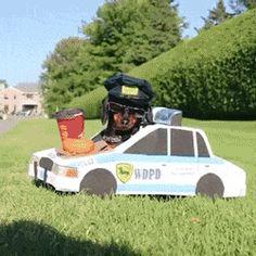 dog police costume cops cop dachshund arrest speeding
