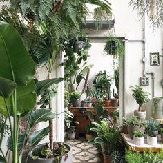 Buy Plants, Indoor Plants, Indoor Gardening, Vegetable Gardening, Gazebos, Room With Plants, Plant Pictures, Nature Decor, Ficus