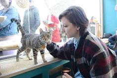 AMERICA'S FIRST CAT CAFE OPENS IN NEW YORK AND LINES ARE ALREADY FORMING AROUND IT