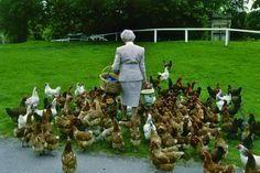 The Dowager Duchess of Devonshire with her chickens.