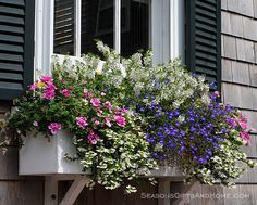 Nantucket Window Box