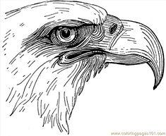 eagleheadlg_opwna.gif (650×533)