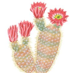 Rainbow Cactus print – Drawn the Road Again  by Chandler O'Leary
