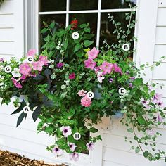 I like this window box design, you can find all the flower names at BHG website http://www.bhg.com/gardening/container/plans-ideas/container-gardens/