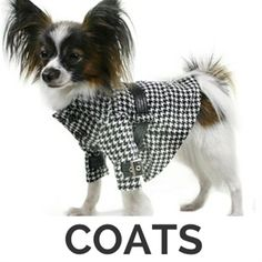 Image result for dog clothes