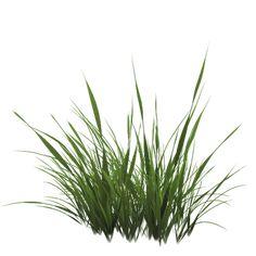 grass01-png.35949 (512×512)