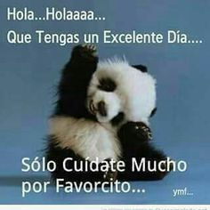 Hola... Funny Panda Pictures, Panda Day, Badass, Good Night, Messages