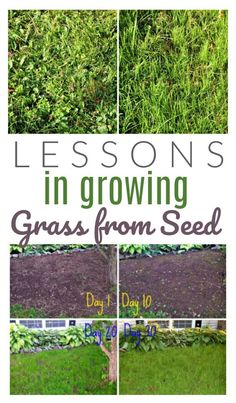 Lessons Learned: Growing Grass from Seed - DIY Passion - Modern Design Types Of Grass, Growing Tomatoes, Growing, Seeds, Lawn And Garden, Growing Grass, Growing Tomatoes From Seed, Seeding Lawn, Gardening Tips