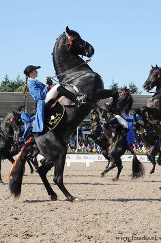 2008 | Menorca Horses #menorca #menorcacultural