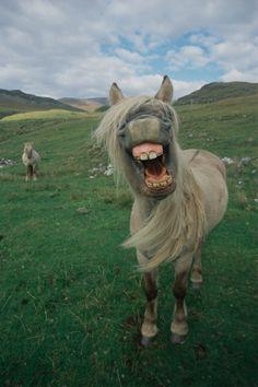 Isle of Rùm, Inner Hebrides, Scotland. I think he has too much rum on the Isle of Ru'm.