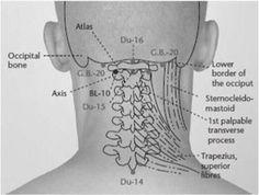 UN POINT POUR SOULAGER LES TORTICOLIS, DOULEURS ET TENSIONS CERVICALES, MAUX DE TÊTE.....VOICI LE POINT ``G.B.-20``..... Situé des deux côtés sous le rebord crânien (l'os du crâne) ou, en plus clair, sur le point d'acupression qui se trouve sur le rebord du crâne dans un creux à deux doigts derrière chaque oreille.Faites des pressions maintenues à deux ou trois reprises, et de 30 secondes à une minute à chaque fois............SOURCE ARTICLE - SANTÉ.CENTERBLOG.NET.......