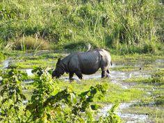 Kaziranga National Park (Assam - India)