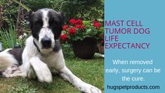 31 Best Mast Cell Tumor images in 2017 | Dog cancer, Mast
