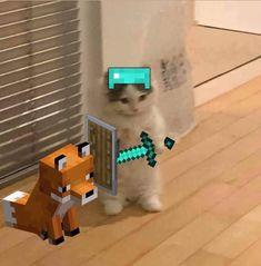 Minecraft Cat, Minecraft Memes, Cute Profile Pictures, Funny Pictures, Cute Funny Animals, Cute Cats, Cat Memes, Funny Memes, Gato Anime