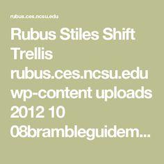 Rubus Stiles Shift Trellis  rubus.ces.ncsu.edu wp-content uploads 2012 10 08brambleguidemay22.pdf?fwd=no