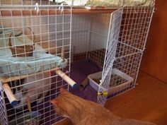 """How To Build an Indoor Bunny Cage: 3-level rabbit condo w/ open top & bottom.  Materials Needed: 2 boxes of storage cubes (at Target) 2 packs of 100 Cable Ties Plywood to make the levels (not shown in picture) 4 wooden dowels (only two shown in picture) Diameter: 11/8"""" Length: Depends on the layout; most required two 46"""" and two 32"""" dowels 3 small spring clamps a bun"""