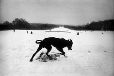 Josef Koudelka, France, Hauts-de-Seine, Parc de Sceaux, 1987