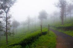 Devala Tea Estate