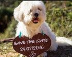 Placa Save the Date p/ 1 PET Rústica