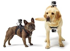 GoPro Harness for Dogs