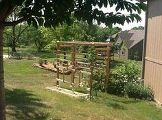 New grape arbor