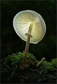 mushroom alight