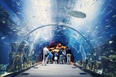Самый большой крытый океанариум: 10 млн литров воды (ВИДЕО) http://www.belnovosti.by/records/49204-samyj-bolshoj-krytyj-okeanarium-10-mln-litrov-vody-video.html