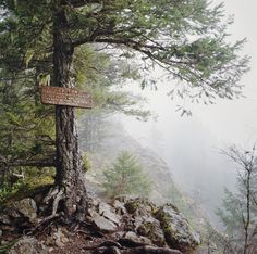Where We're Going, We Don't Need Trails, 2013   by Danielle Hughson