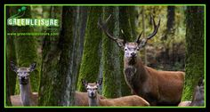 A rare click from #MuthangaWildlife   Enjoy the nature experience in #Wayanad with our Weekend Packages:)  http://greenleisuretours.com/Vythiri-Wayanad-Packages.php  Reach us GreenLeisure Tours & Holidays for any #Kerala #Tour #Packages   www.greenleisuretours.com  Like us & Reach us https://www.facebook.com/GreenLeisureTours for more updates on #Kerala #Tourism #Leisure #Destinations #SiteSeeing #Travel #Honeymoon #Packages #Weekend #Adventure #Hideout — at Wayanad Kerala.