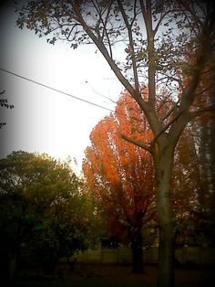 Autumn in the Freestate 2013