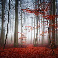 Autumn Is Coming Soon by Carsten Meyerdierks on 500px