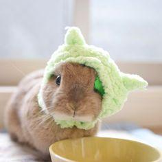 * #ねこひつじちゃん バージョン。 パープル欲しかったのにミドリ。。 ミドリ似合わないね( ̄▽ ̄;) そして、おっきいからすぐズレる * #ネザーランドドワーフ #うさぎ #ふわもこ部 #ペット #アニマル写真部 #bunny #igersjp #iganimal_snaps #cutepetclub #pet #instapet #instaanimal #weeklyfluff #webstapets