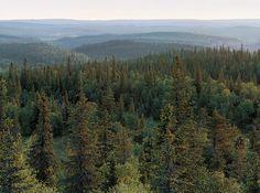 Syöte National Park. Photo: Jorma Luhta