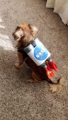 Alien Dog Costume, Puppy Halloween Costumes, Puppy Costume, Diy Dog Costumes, Halloween Outfits, Costume Ideas, Nasa Costume, Boy Halloween, Halloween 2018