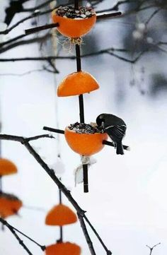 Easy Bird Feeders by Ulla Vestola: Use your leftover orange rinds to feed your neighborhood birds. : Easy Bird Feeders by Ulla Vestola: Use your leftover orange rinds to feed your neighborhood birds. Make A Bird Feeder, Garden Bird Feeders, Garden Totems, Easy Bird, Ideias Diy, Nature Crafts, Winter Garden, Bird Feathers, Garden Projects