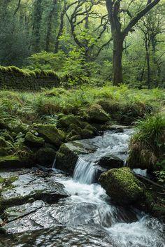 Halstock Wood, Dartmoor, Devon, England by Garrod Garrod Wolstenholme Terre Nature, Beautiful World, Beautiful Places, Landscape Photography, Nature Photography, Devon England, Devon Uk, Small Waterfall, Dartmoor