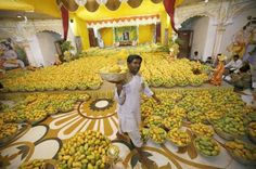 A Hindu priest carries a basket of mangoes to distribute among devotees after it was offered to Hindu God Lord Krishna inside a temple during a mango festival in the western Indian city of Ahmedabad.