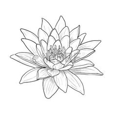 lotus flower tattoo designs: Floral Water Lily. Vector line style Illustration
