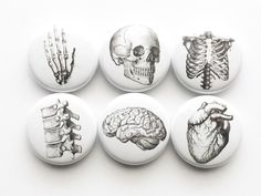 """Anatomy Gift Set 2 slide top tins + 1 set of six 1"""" magnets or pins stocking stuffers party favors skull brain anatomical heart geekery goth"""