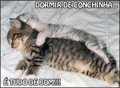 20 Melhores Imagens De Bom Dia Tarde Noite Gatos Bonitos Gatos