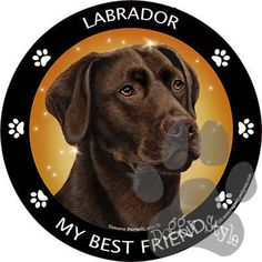 Chocolate Labrador My Best Friend Dog Breed Magnet http://doggystylegifts.com/products/chocolate-labrador-my-best-friend-dog-breed-magnet