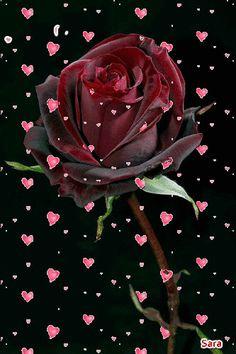 lulet ma te bukura me kuran ile ilgili görsel sonucu Wallpaper Nature Flowers, Rose Flower Wallpaper, Beautiful Flowers Wallpapers, Beautiful Rose Flowers, Love Wallpaper, Amazing Flowers, Love Flowers, Flower Images Wallpapers, Roses Gif