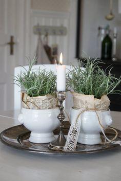 festive rosemary pots